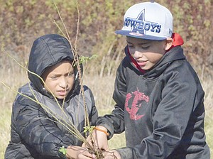 Sunnyside Pioneer Elementary School students Miguel Garcia and Raymond Ramirez (L-R) prepare a wood rose for planting at Heavenly Hills Harvest Farm. The effort to plant native plants along the Yakima River is part of the habitat restoration underway from Sunnyside to Cle Elum.
