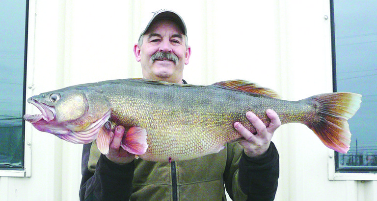 "The fishing is good right now in the Columbia River. Just ask Pasco's John Grubenhoff, who recently pulled this 20.32-lb. Walleye from the Lake Wallula section of the Columbia. The catch is a Washington state record for Walleye. The previous record for the largest Walleye snagged in Washington state was 19.3 lbs., set by Mike Hepper of Richland in 2007, ironically from the same stretch of river that Grubenhoff found this beauty. Grubenhoff caught his Walleye while trolling in 22 feet of water upstream, using a Rapala J-13 lure that was attached six feet behind a 2-oz. ""bottom walker"" weight."