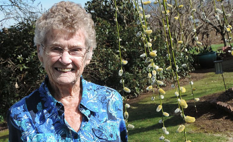 Margaret Annala admires the pussy willow tree she bought as a birthday present for her daughter.