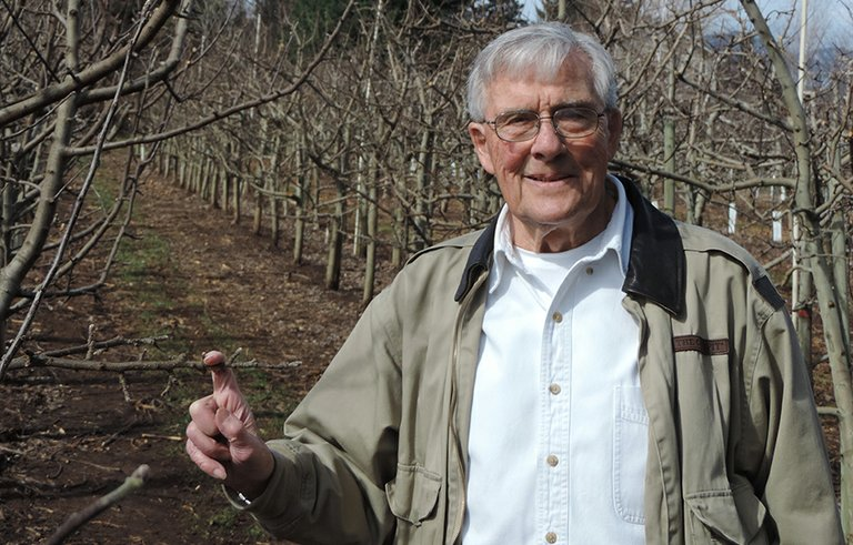 Dr. Allan Henderson inspects his apple orchard just outside his Belmont Avenue home.