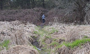 Indian Creek Trail will be improved on this current, primitive path that links Devon Court with the section of trail that runs behind the Columbia Gorge Community College Indian Creek campus. Lori Stirn, director of Hood River Valley Parks and Recreation District, expects that work on the trail improvements will begin this spring, pending approval of the City Planning Department.