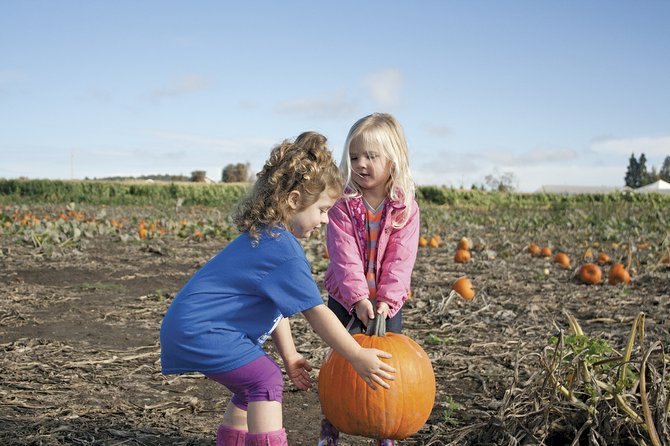 Grace Christian preschoolers Ruby McGinnis and Alli Pittman try to carry a pumpkin during a field trip to Airlie Hills.