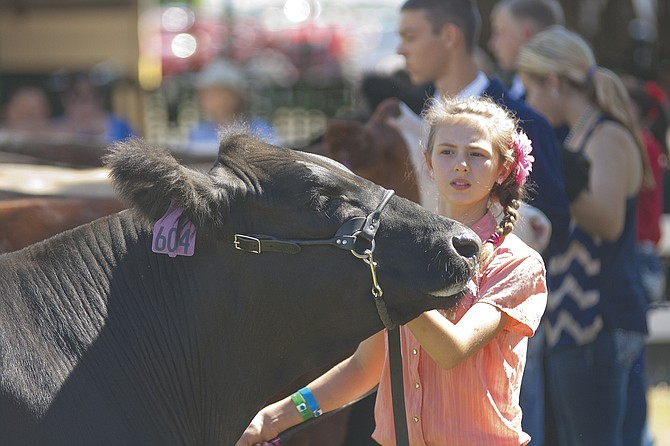 Youths from 4-H and FFA showing their livestock projects is one of the draws of the annual Polk County Fair. The fair board is seeking suggestions for a theme for the 2015 fair.