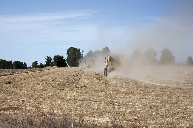 Lots of sunshine and heat means harvests are taking place early, about two weeks ahead of time on average, but a lack of rain may mean lower yields for some farmers.