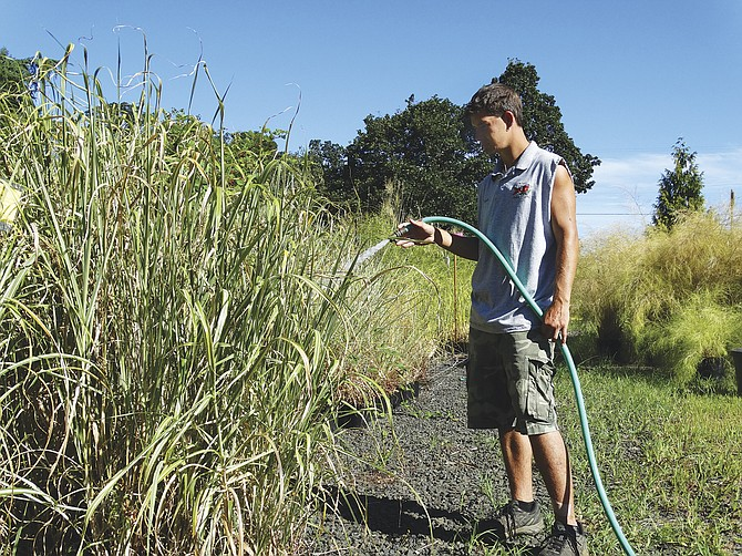 Josiah Brown waters plants by hand at Daryll's Nursery after some Rickreall Creek water rights were suspended.