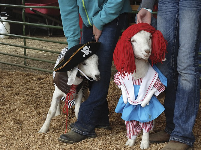 Image result for pirate goat