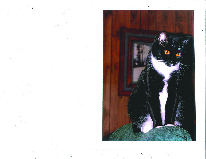 """Contributed photo Tuxedo the Cat (pictured) was saved from the Dumpster by Beverly Frost and Rosalie Smith of Animal Ark almost two years ago. She was given to Marshall Bean who, at the age of 90 now, had never had a cat of his own. Tuxedo has bonded to Marshall, Judy said (who even said Tuxedo is """"a little bit spoiled"""") and Marshall loves her back. """"She has turned into a beautiful cat and is very smart,"""" Judy added. """"The girls really do a good job of finding a home for the strays. We cannot thank them enough for ours."""""""
