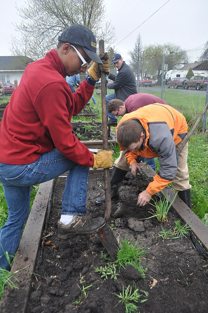 A misty rain throughout Saturday morning, May 6, didn't dampen efforts by volunteers preparing the Camas Prairie Food Bank community gardens. More than two dozen people from several areas churches weeded garden beds, transported in soil and tilled it into prepared boxes for summer planting. The grounds were also cleaned and new composting boxes built. The event was co-organized by Grangeville Real Life, and also the newly formed men's ministry meeting at Centennial Evangelical Free Church.