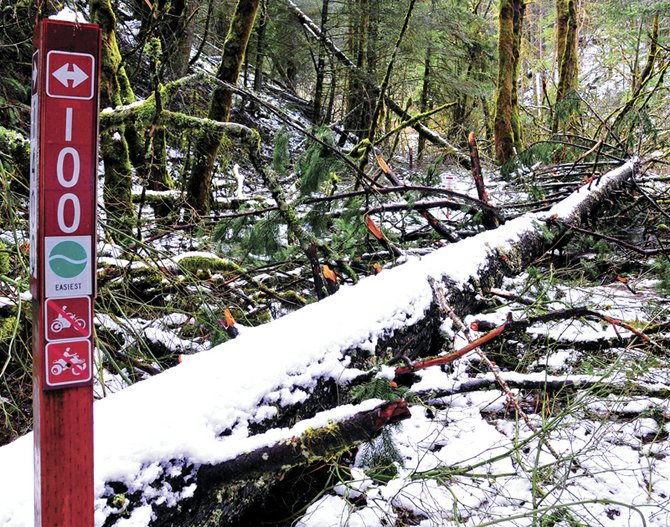 Seven streams trail at the base of Post Canyon is virtually impassable even by foot due to damage from January's ice storm. The popular trail will require extensive work before it can be reopened.