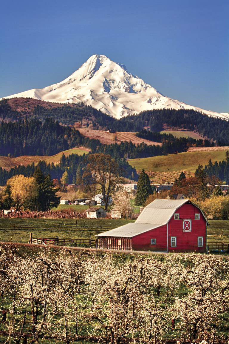 Nick and Pam Bielemeier are touring the valley in search of as many barns as they can find. The two have been working to photograph and gather details about the county's many barns for a book project and for The History Museum of Hood River County. The barn above, pictured in spring of 2011, was owned by the late Frank Herman.