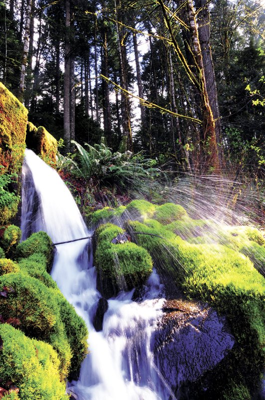 Oxbow springs is a source of pristine water gushing from the base of steep cliff walls that dominate the Cascade Locks skyline. The spring, seen here near the Oxbow Fish Hatchery, is at the center of a continuing controversy, as the interests of environmental groups clash with potential economic development.
