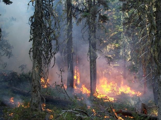 Trees burning in the Cascade Creek Fire.