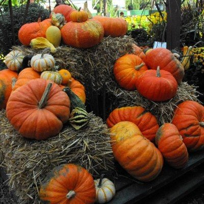 Summer's flowers and warm weather are fading away, replaced by the cool, early morning nip of fall. Enjoy a mixture of both seasons around town, like these cheerful displays at Good News Gardening.
