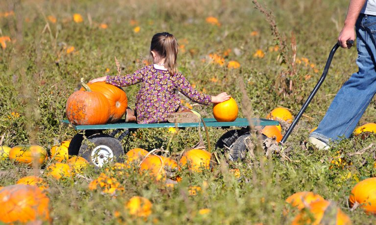 Pick your pumpkin: Autumn gatherers were out en masse this weekend enjoying the beautiful weather, getting farm-fresh fruit and vegetables and, of course, picking just the right size and shape pumpkins for Halloween festivities.