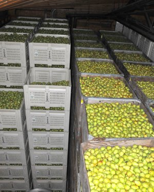 Season'S bounty awaits packing and distribution at local storage facilities, including Bickford orchards in Pine Grove.