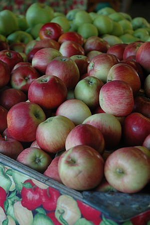 Kiyokawa Orchards offers four varieties of U-pick apples this weekend