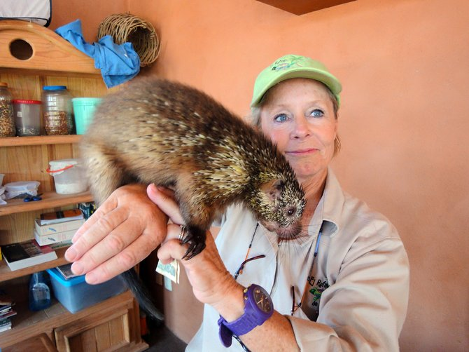 Laurel Patrick shows a Mexican tree porcupine during an animal encounter program at El Refugio de Potosí.