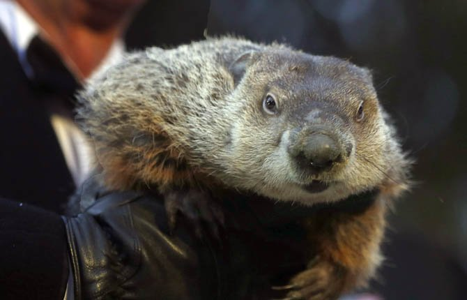 An end to winter's bitter cold will come soon, according to Pennsylvania's famous groundhog.
