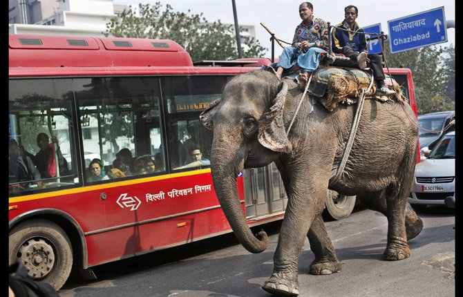 Elephant Traffic