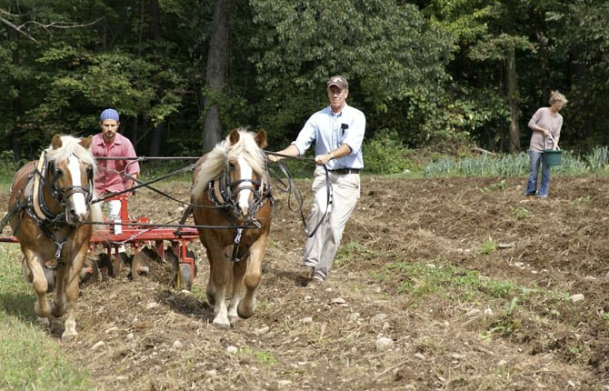 Mac Mead, right, tills soil with horses at the Fellowship Community.