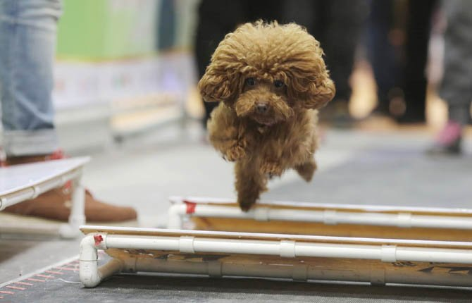 Clearing Hurdles