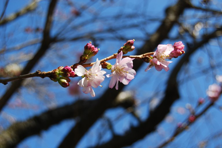 Signs of spring on appeared Monday, March 4 on Cascade Avenue in Hood River.