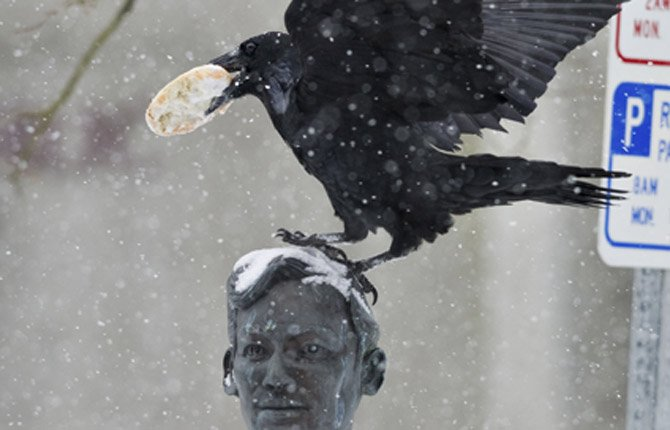 Cool Treat A raven perches with a frozen bagel on the bust of Dr. Jose P. Rizal in Manila Square in downtown Juneau, Alaska.