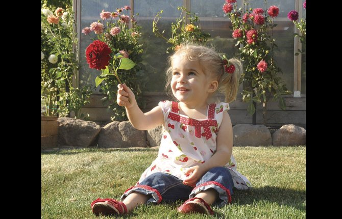 Madeleine Omeg, 2, holds a dahlia cut from her parents' yard on Dry Hollow Road.
