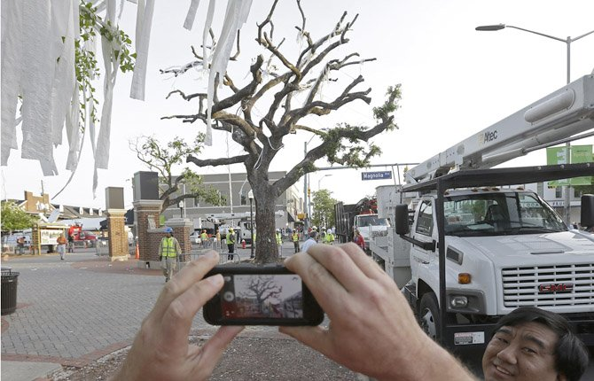 Farewell to the Toomer Trees
