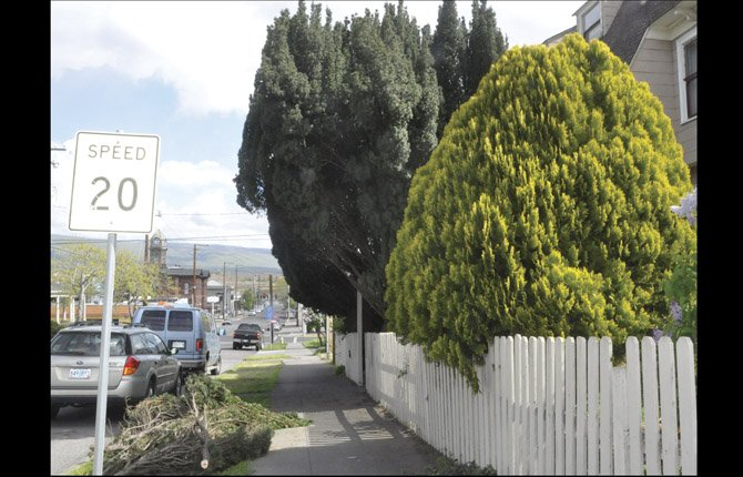 UNRULY SHRUBBERY like this at a corner lot on Union and Fifth streets can be a visual obstruction for motorists. The city's code enforcement officer is keeping an eye out for safety hazards.