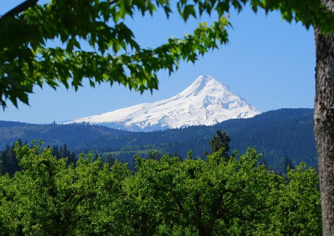 Mt. Hood as seen from McCurdy Farms fruit stand at Tucker Road and Portland Drive.