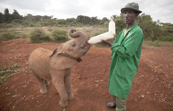 One Big Baby