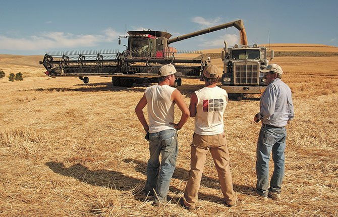 Wheat truck drivers watch as a combine offloads near Five Miule Road in this Chronicle file photo.
