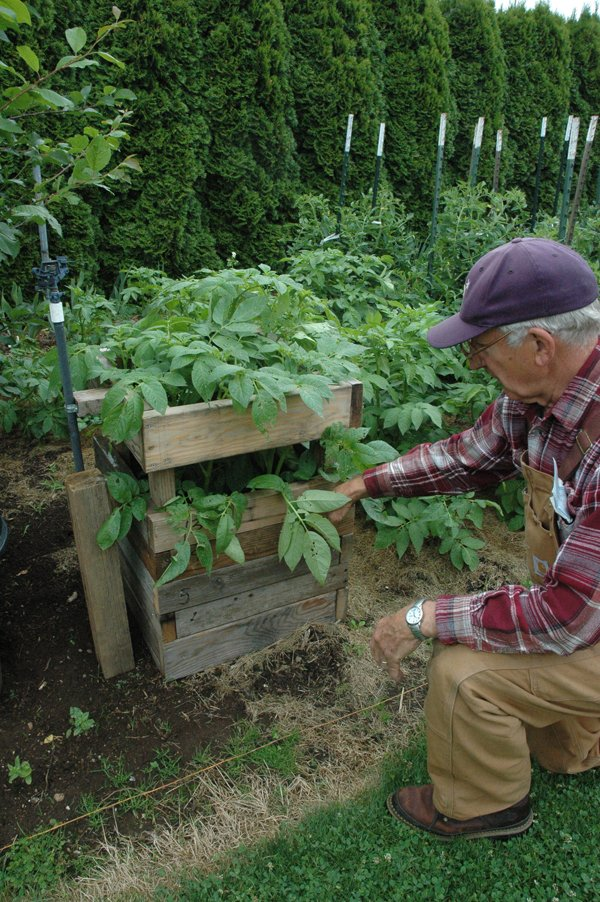 "LEarn innovative gardening techniques on the tour, including a ""potato"" tower developed by John Ihle, on Saturday's Master Gardeners tour."