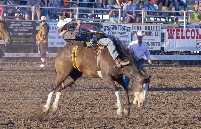 Bareback bronc rider Anthony Bellingham wows the crowd at the Fort Dalles Rough and Wild rodeo Friday night.