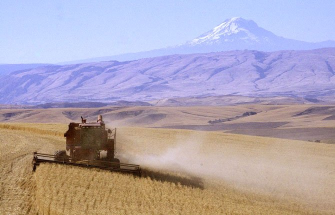 Wheat harvest is in full swing in the Mid Columbia. Here, a combine works east of            Dufur last week with Mt Adams in the background.