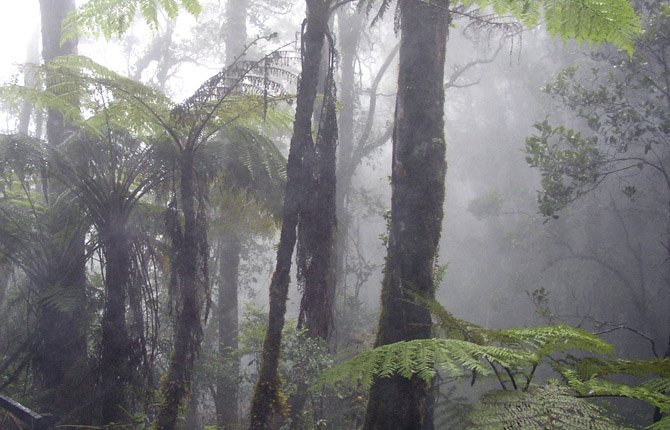 RAIN FORESTS, like Cloud Forest on Mt. Kinabalu in Borneo, often have relatively high humidity.