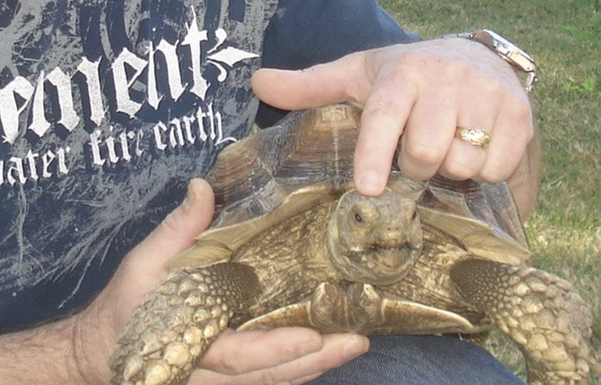 JIM FRAKES with his pet tortoise, Pee Wee, who was stolen for about a month and just recently found.