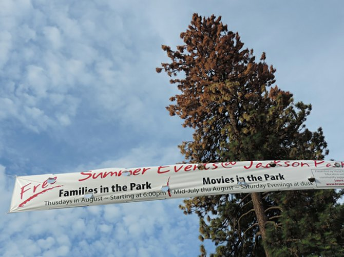 Beetle infested tree at Jackson Park will be removed next week.