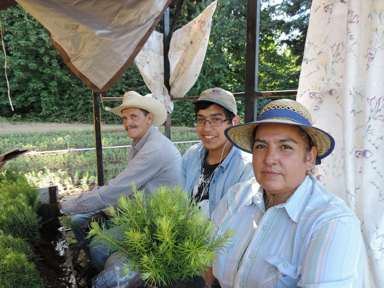 BELIALDO AND REYNA, with their nephew, Marcos Galvez, pause while planting fir seedlings aboard a planting machine at  Lava Nursery in Parkdale.