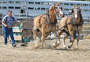 Bill Martsden of Pullman gets his geldings, Rock and Rebel, to pull 5,500 lbs. in the heavyweight division.