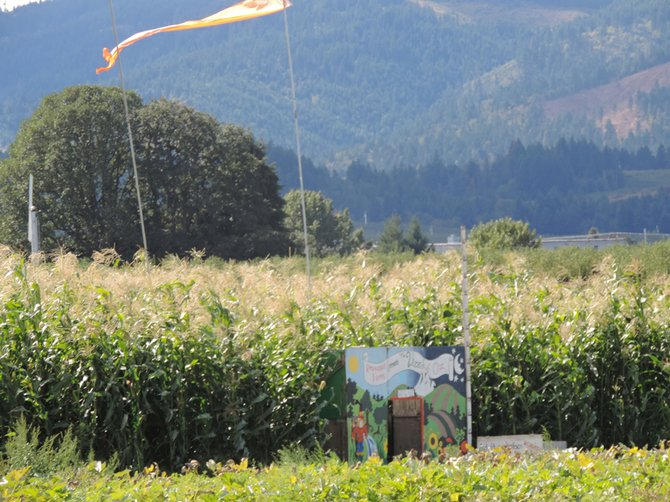 """Entry to the corn maze, with """"Wizard of Oz"""" theme, awaits visitors at Rasmussen Farms near Odell."""