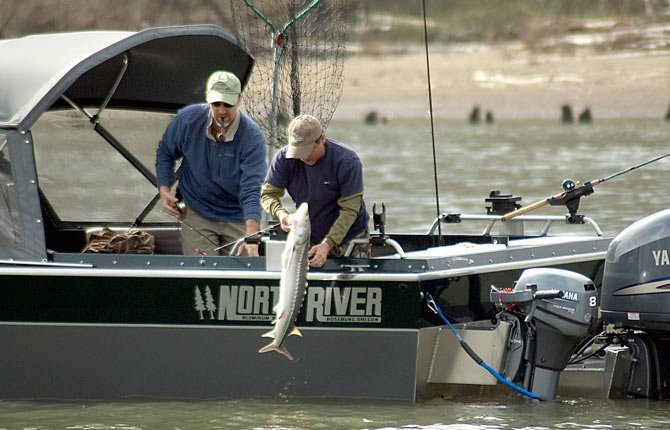 Anglers reel in a white sturgeon while fishing from a boat on the lower Willamette River.