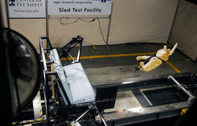 Subaru and the Center for Pet Safety in Manassas, Va., conducted a collaborative crash test study to test the effectiveness of popular pet harnesses. All the dummy dogs used to test dog restraint harnesses for the Center for Pet Safety make up a team of what is believed to be the nation's first instrumented, weighted and correct canine prototypes.