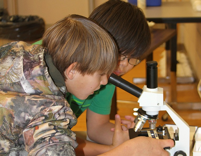 Youngsters view fine details of insects and plants by looking through a microscope.