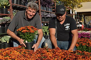 "BOB LANDGREN, owner of the Vanguard Nursery in White Salmon, and Marcello Castañe-da crouch next to some colorful mums Friday. Landgren said buyers could pick between 40 different varieties of mums as well as 26 varieties of kale and cabbage at his Harvest Fest stand. Like his mums, Landgren is a perennial presence at Har-vest Fest and he said he hasn't missed one since the event began over 30 years ago. Though he has seen plenty of fair-weather Harvest Fests in the past, Landgren thought this year's event might have been one of the nicest ones he's at-tended and said he ""didn't re-member being in a T-shirt"" ever before."