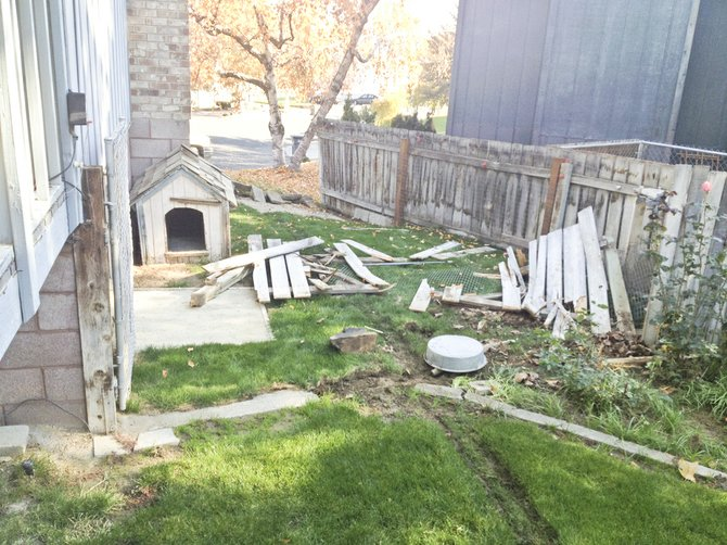 One of the casualties from last night's high speed chase, involving police and a carjacker, was this yard on Sunnyside's Rainbow Lane. The suspect led police to the Cherry Hill area near Granger, where he crashed the stolen vehicle and fired a shotgun at a Sunnyside police officer, before forcing his way into a home there and injuring a female occupant of the house with another shotgun blast.