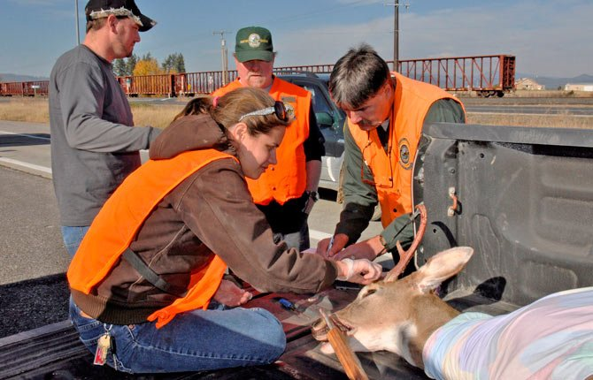 Washington Fish and Wildlife Department wildlife biologists Annemarie Prince, front, and Dana Base, right, remove a tooth and take measurements on a whitetail deer buck brought in to the Deer Park, Wash., hunter check station. The deer was brought in by Matt Van Horn, back left, who is talking to hunter education instructor Dean Kramer.