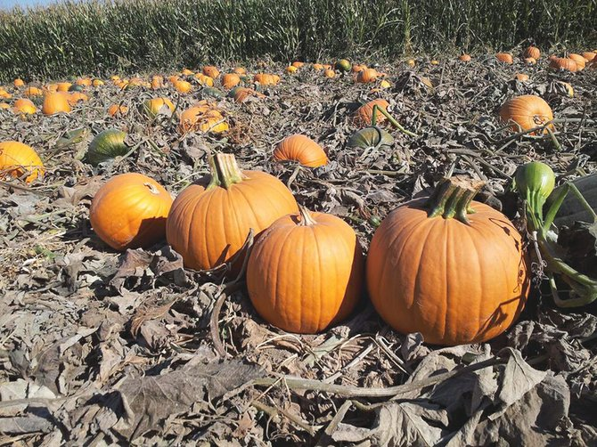 Though closed for the season, Woody's Pumpkin Patch and Corn Maze will be the site this coming Saturday for a punkin' chunkin' organized by local scouts.
