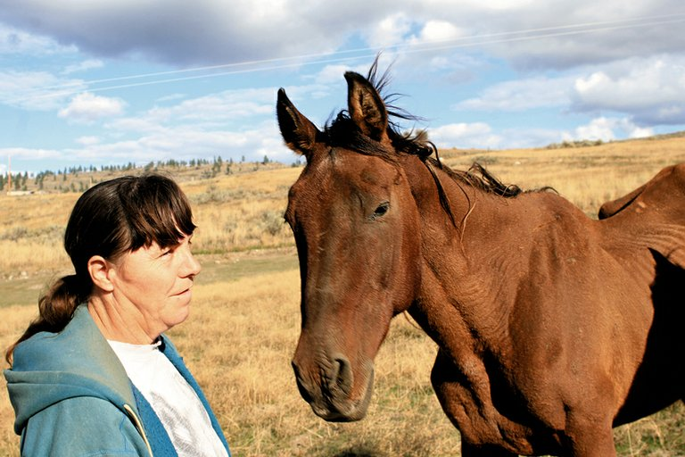 """Janice Andrew checks on Bucky, one of the rescued horses currently living at The Nourishing Hand east of Tonasket. Bucky was a """"skeleton with skin"""" when the animal shelter took him in about three months ago, Andrew said."""